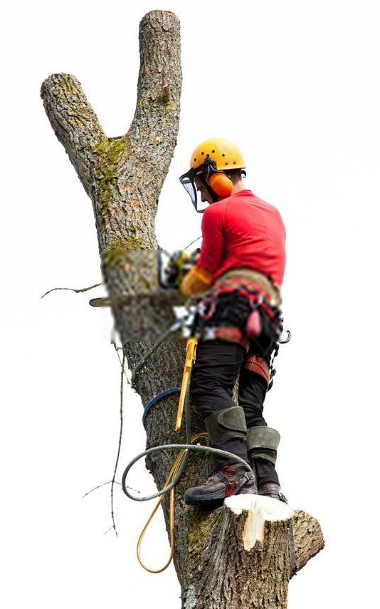 Tree Removal 01